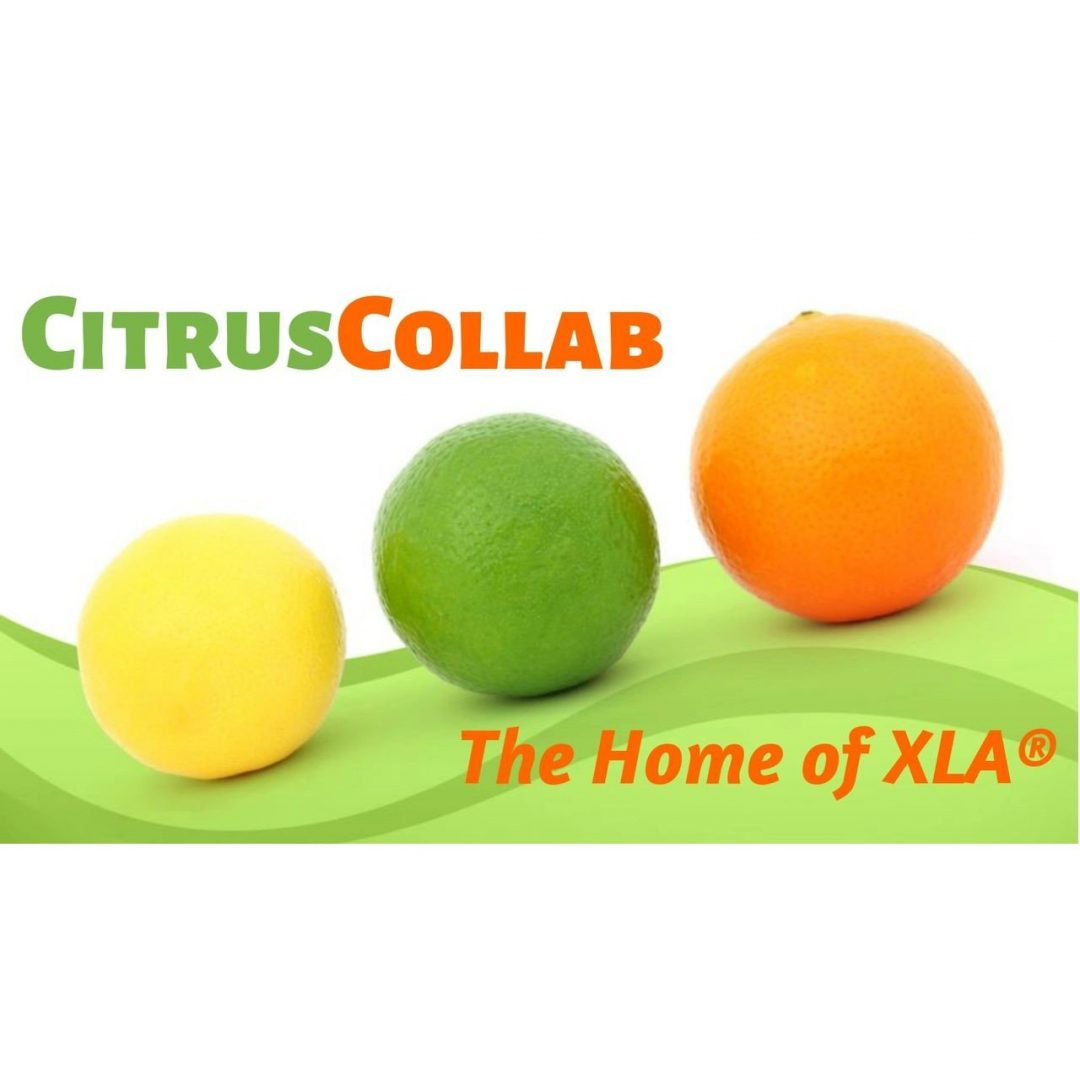 citrus collab